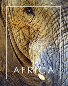 Africa Banknotes Menu